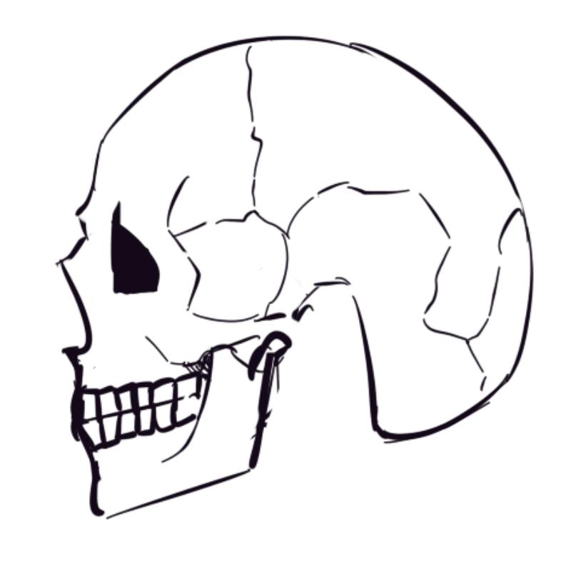 오늘 하루.. : 오늘 하루종일 두개골이 너무 그리고십어서 두개골만 그린것같음 스케치판 ,sketchpan