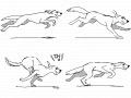 멍멍이 뛴다 : 동물뛰는동작 스케치판 ,sketchpan