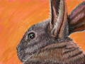 Bunny Rabbit : Finally finished.  I don\'t think I will be doing fur anytime again soon. 스케치판 ,sketchpan