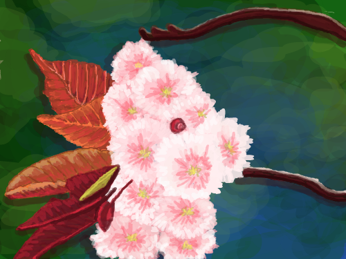 Unusual Pink Flowers : Just a pretty color combination that I wanted to try 스케치판 ,sketchpan