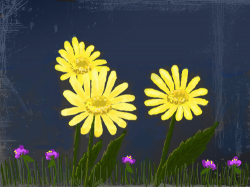Daisies and Violets : just some simple flowers before bedtime , 스케치판,sketchpan,kute