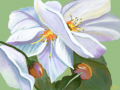 White Flowers : There is more than just white, but I am not sure of what type of flowers these are so that is why I just named them White. 스케치판 ,sketchpan