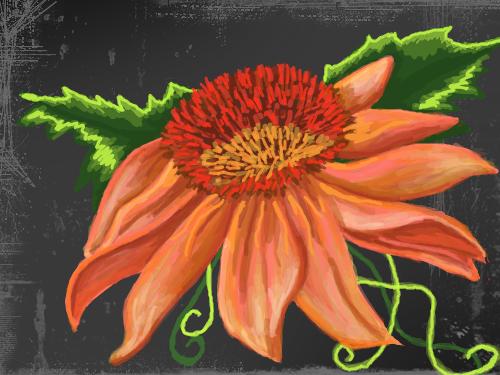 orange flower : just another flower 스케치판 ,sketchpan