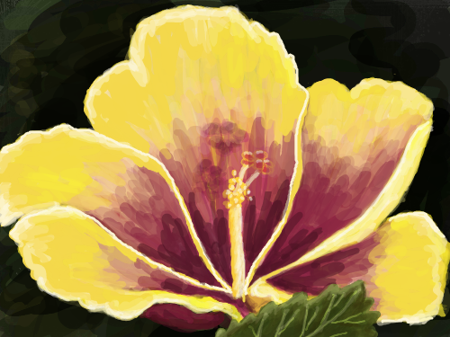 Hibiscus : A big yellow and pink Hibiscus 스케치판 ,sketchpan