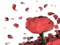 꽃 : 꽃