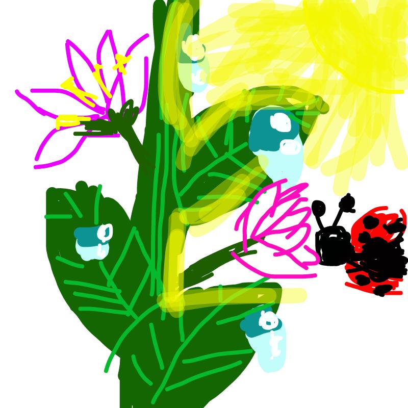 꽃 : 꽃 스케치판 ,sketchpan