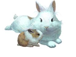 엄마와아기토끼 : 토끼 두 마리의 행복 한 한때 , 스케치판,sketchpan,스케치판