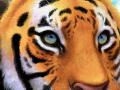 스케치판 호랑이 : 호랑이를 열심히 그려보았어요 스케치판 ,sketchpan