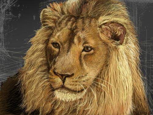 스케치판-사자 : 호랑이에 이어 사자탄생 ㅎㅎ^^ 스케치판 ,sketchpan