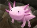 우파루파 : 도룡뇽과의 희귀물고기랍니다. 완전 귀여워요>.< 스케치판 ,sketchpan