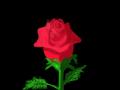ROSE : SINGLE RED ROSE 스케치판 ,sketchpan