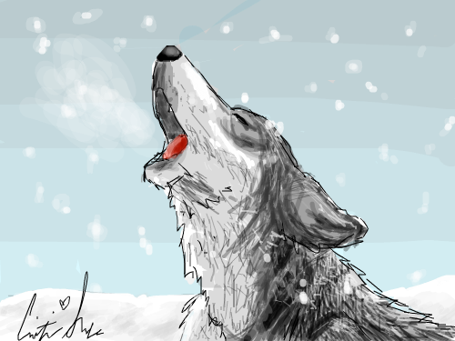 Wolf : I don't EVER draw animals. I kinda like it, but it's not very good. My sister disagrees. She thinks it's awesome. 스케치판 ,sketchpan